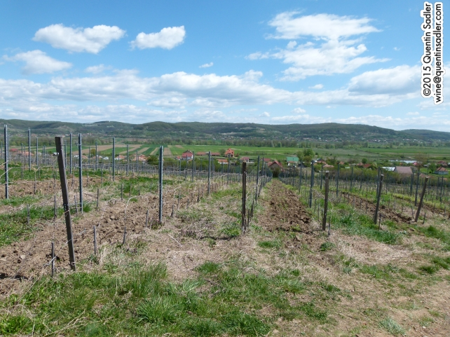 Vineyards at Corcova.