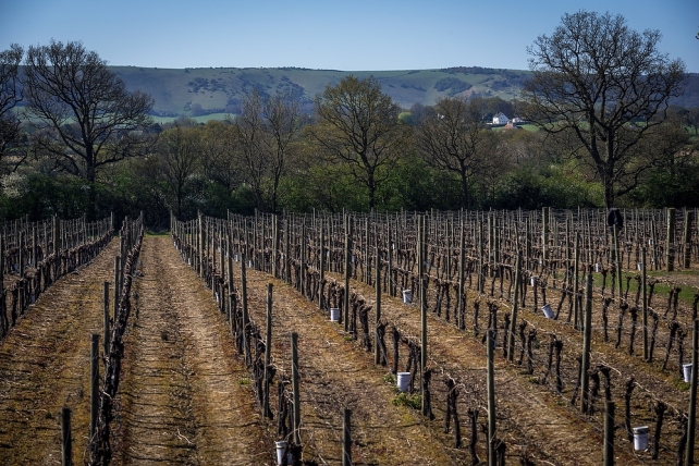 Ridgeview Vineyards, photo by kind permission of James Pike Photography.