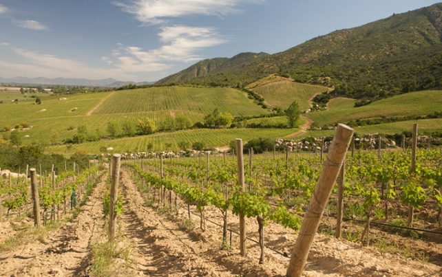 Colchagua Valley vineyards - photo courtesy of Wines of Chile.