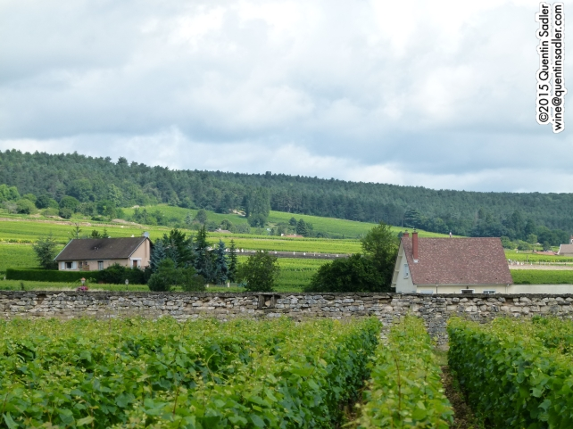 Vineyards around the southern Côte de Nuits.