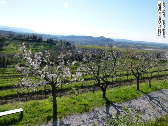 Vineyards in Colli Orientali.