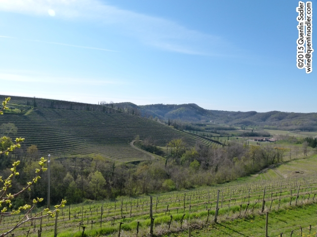 The beautiful vineyards of Brda.