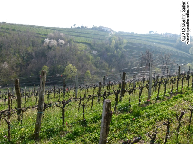Vineyards of Collio.