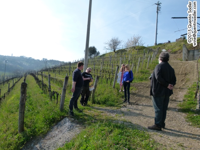 Our little group in a vineyard in Collio.