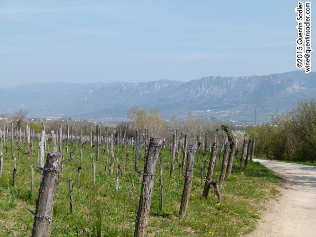 Vineyards in Vipava.
