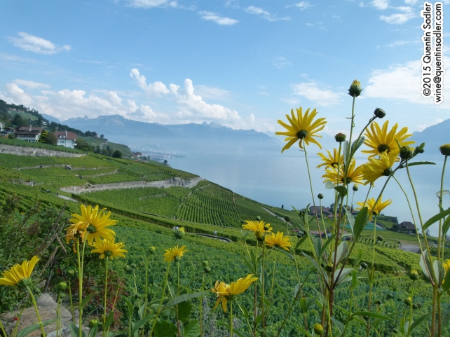 The beautiful vineyards of Lavaux.