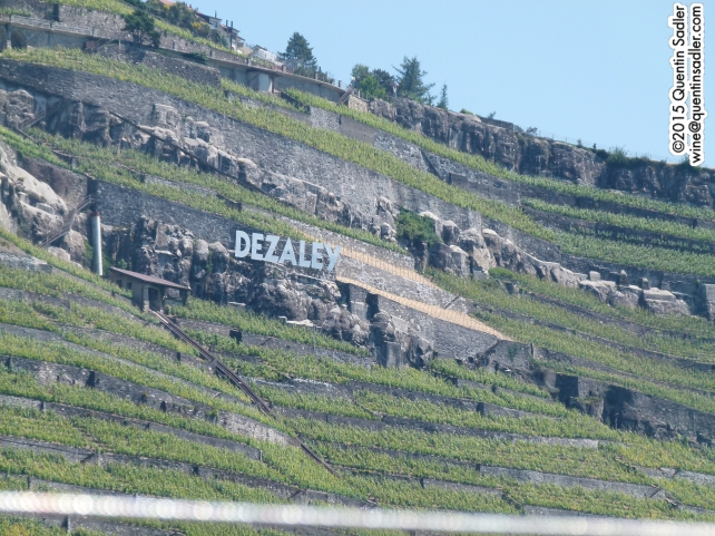 You can see what sets Dézaley apart, the steep slopes face due south, the sun reflects off the water into the vineyards and those stone walls absorb the heat - all of which helps achieve full ripeness.