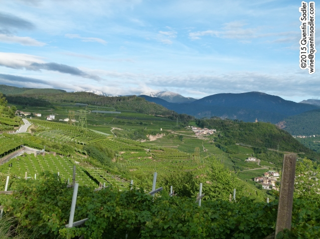 Beautiful Trentino vineyards.
