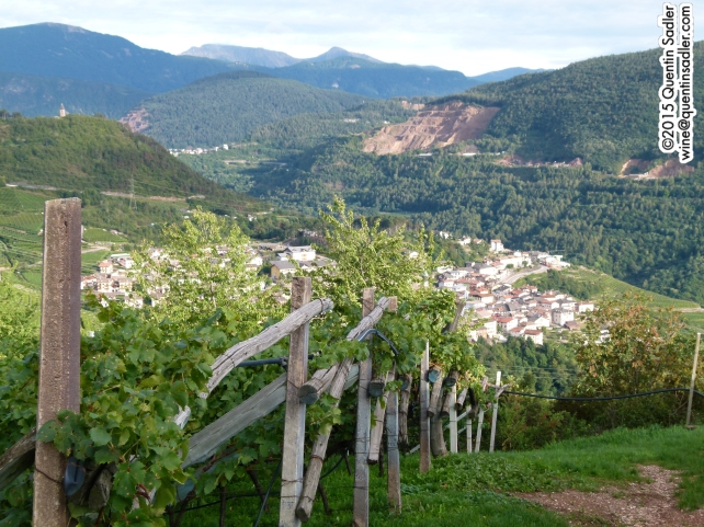 More beautiful Trentino vineyards.
