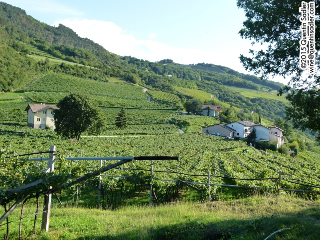 More gorgeous vine covered slopes, I cannot get enough of them!
