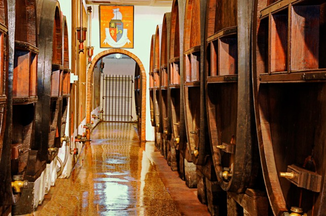 The 100 year old foudres at Clos Cibonne -