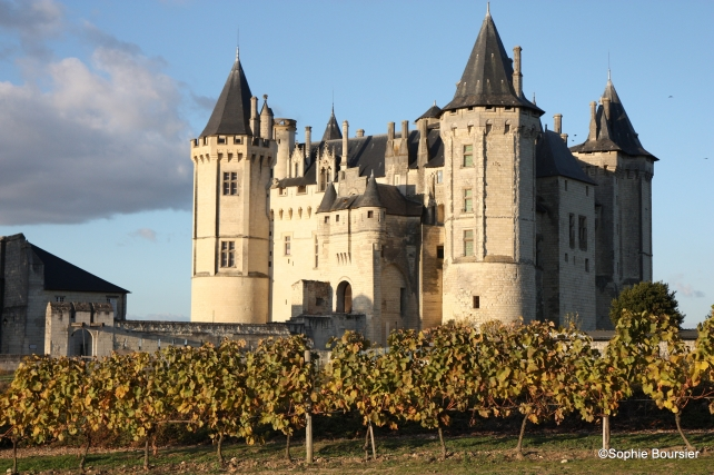 Vines at Château de Saumur, photo courtesy of Bouvet-Ladubay.