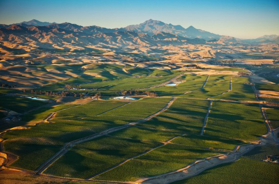 Yealand's Seaview Vineyard - photo courtesy of Yealands estate.