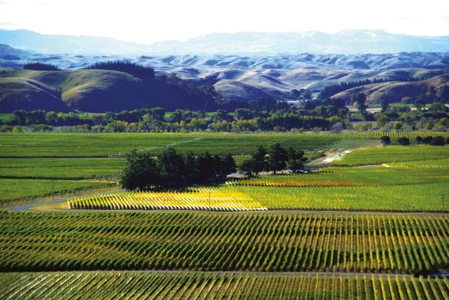 Vidal Estate vineyard in the Gimblett Gravels district - photo courtesy of Vidal Estate.