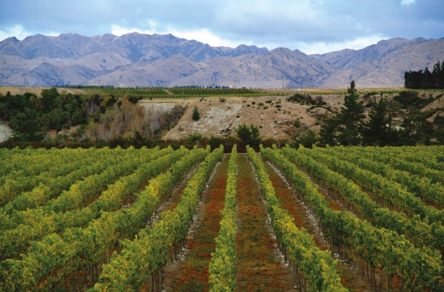 Marlborough vineyards - photo courtesy of Villa Maria.
