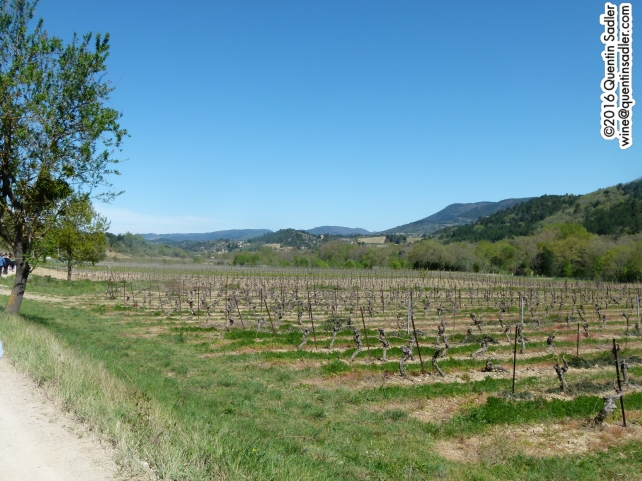 Limoux vineyards, April 2016.