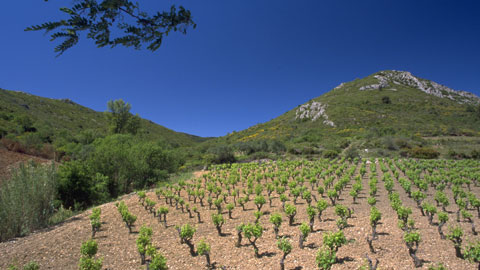 The beautiful Domaine La Croix Chaptal – photo courtesy of the winery.