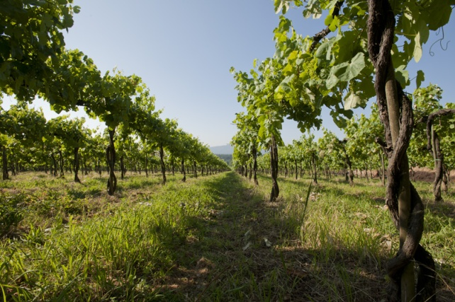 Quinta de Azevedo - photo courtesy of Sogrape Vinhos.