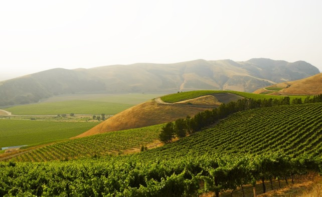 Bien Nacido Vineyard in the Santa Maria Valley - photo courtesy of the vineyard.