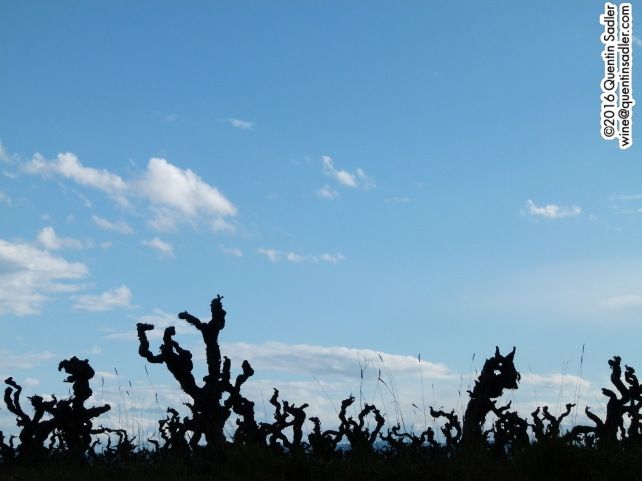 Vines on a hill side in Minervois-La Livinière.