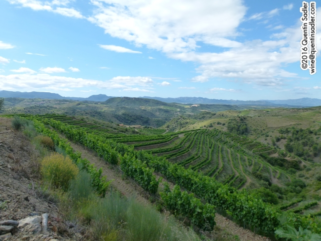 Beautiful vineyards in priorat.