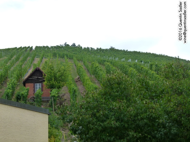 The Untertürkheimer Herzogenberg vineyard at Weingut Wöhrwag.