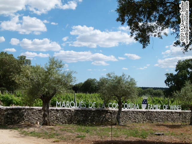 A small Syrah vineyard at the Hacienda Zorita Organic farm. They mainly use this wine as a rub for one of the cheeses.