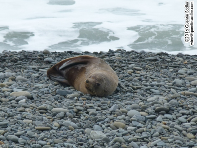 This little fella was basking on the beach just in front of Graham Vineyard.