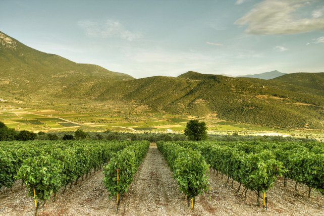 Domaine Skouras vineyards - photo courtesy of the winery.