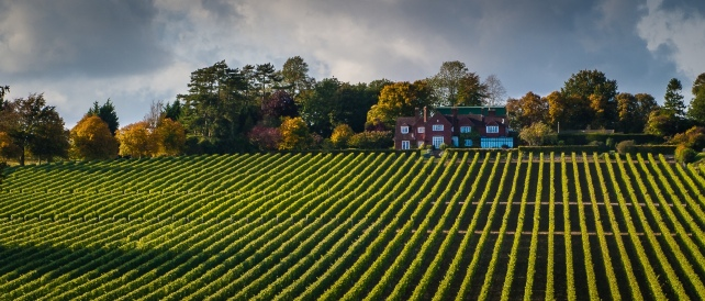 house-and-vineyard