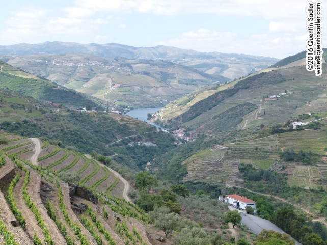 The view from my room at Quinta do Noval. The closest building is the winery.