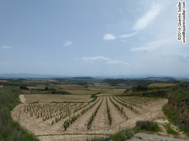 Vineyards near Haro in Rioja.