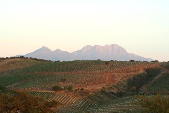 The Manzanar Vineyard - photo courtesy of the winery.
