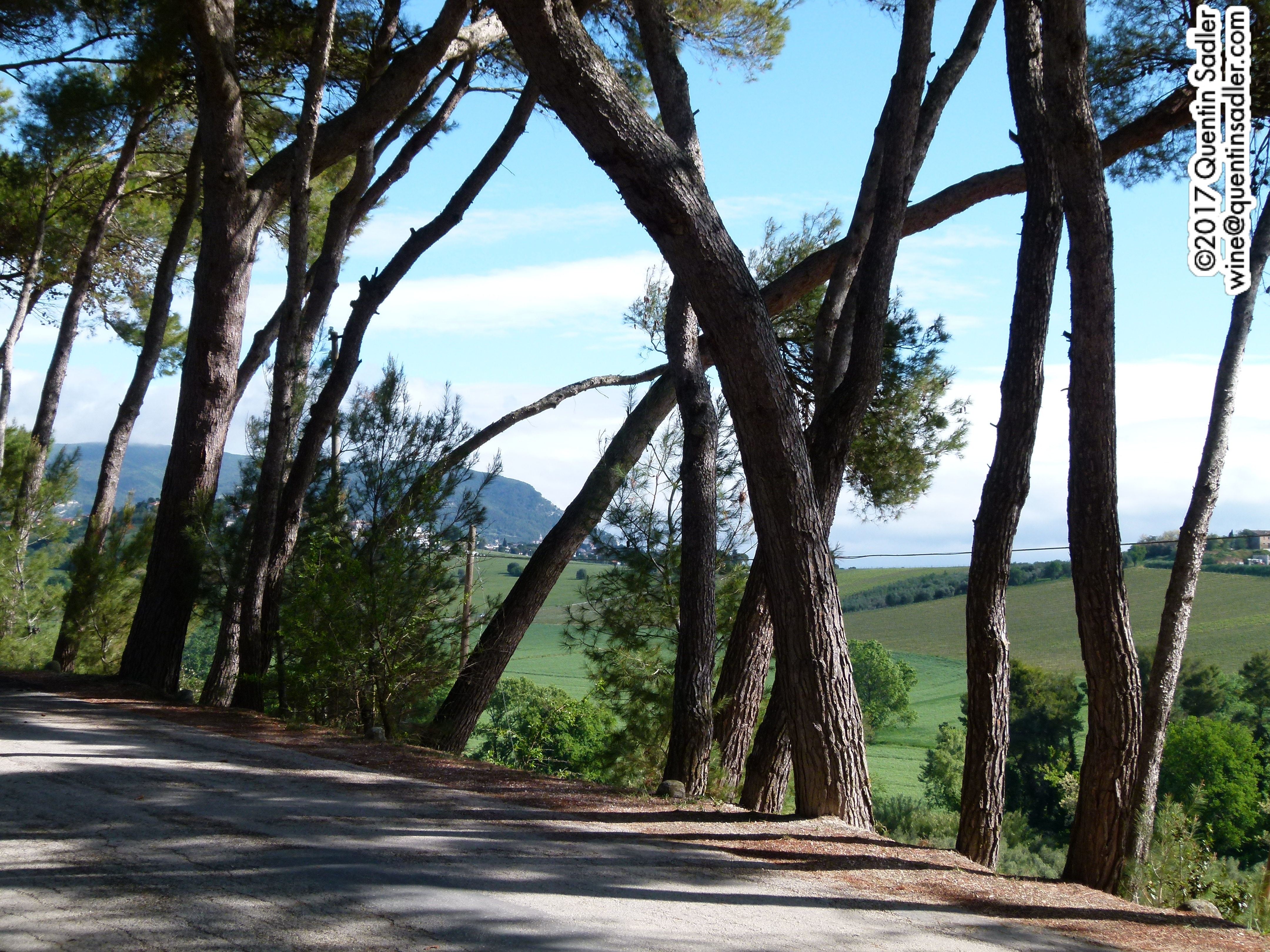 The Marche – a region awakes: Part 2 – the red wines | Quentin ...